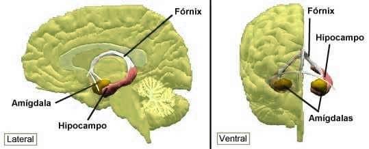 La amígdala